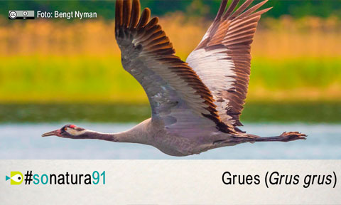 El So de la Natura 91: Grues (Grus Grus)